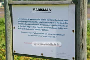Charca de Zeluán y Ensenada de Llodero. Monumento Natural Charca de Zeluán y Ensenada de Llodero