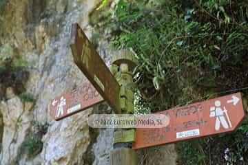 Senda del Oso (Tuñón - Santo Adriano)