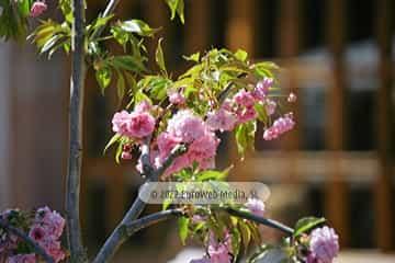 Primera Flor de Grado