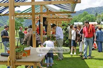 En Grullos, concejo de Candamo. Festival de la Fresa de Candamo