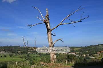 Conjunto Histórico de Ribadesella