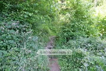 Ruta senderista de El Camín Encantáu (Valle de Ardisana). Ruta senderista de El Camín Encantáu
