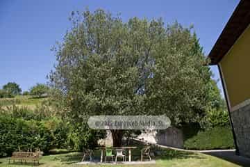 Habitación de los niños. Casa rural La Faya