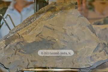 Museo de Geología de la Universidad de Oviedo