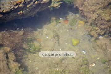 Playa Aramar