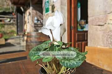 Exteriores. Hotel rural Casa Lao